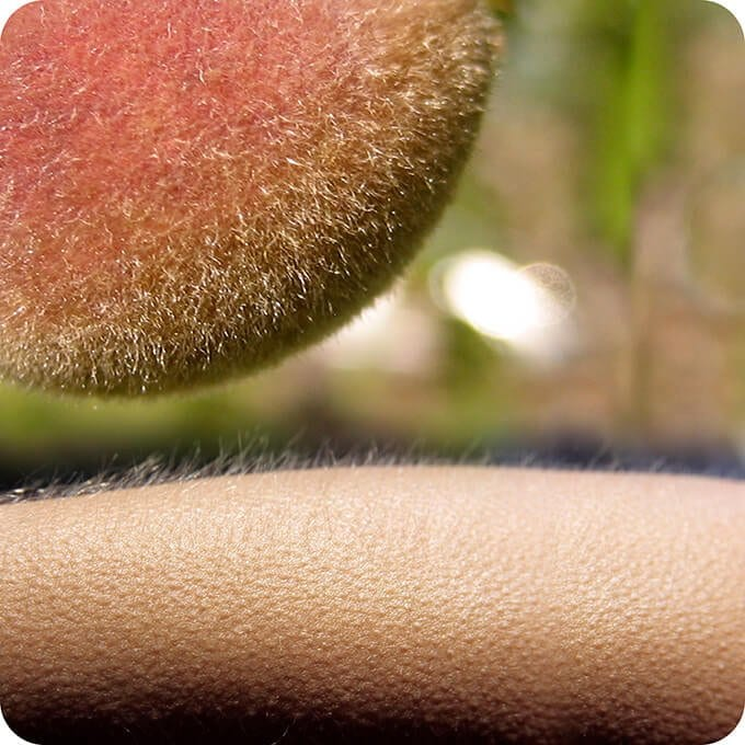 peach fuzz on fruit and skin