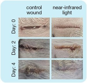 Near-infrared LED wound repair